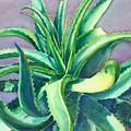 Aloe Vera Watercolor by Linda Ruiz-Lozito