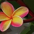 Aloha by Craig Wood
