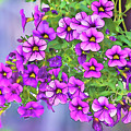 Aloha Purple Sky Calibrachoa Abstract I by Linda Brody