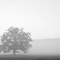 Alone by Bob Decker