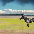 Alone by Greig Huggins