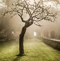 Alone In The Fog by Maurizio Martini
