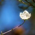 Alone In The Wind by Subhadra Burugula