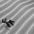 Alone by Kathi Mirto