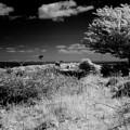 Alone by Keith Elliott