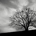 Alone On A Hill In Black And White by Tom Mc Nemar