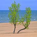 Alone On The Beach by Ann Horn