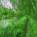 Along Creek #g1 by Leif Sohlman