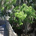Along Florida Boardwalk by Carol Groenen