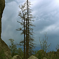 Along The Needles Highway by Christiane Schulze Art And Photography