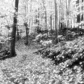 Along The Path Bw  by Lyle Crump