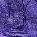 Along The Windowpane Path by Joseph Yvon Cote