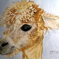 Alpaca Cutie by Carol Grimes
