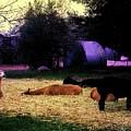 Alpacan Twilight by Carolyn Parker