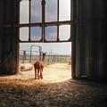 Alpacca Guard by David Matthews