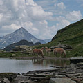 Alps' Horses by Laura Greco