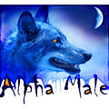 Alpha Male by Mal Bray