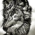 Alpha Male - The Wolf by Scott D Van Osdol