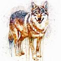 Alpha Wolf by Marian Voicu