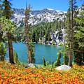 Alpine Beauty In The Sierra by Lynn Bauer