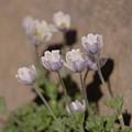 Alpine Flowers by Jeff Swan