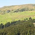 Alpine Forest Landscape.  by Ilan Rosen
