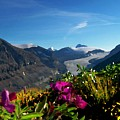 Alpine Meadow Flowers Overlooking Glacier by Greg Hammond