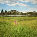 Alpine Meadow by Sue Collura