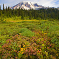 Alpine Meadows by Mike  Dawson