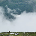 Alpine View by Sonal Dave