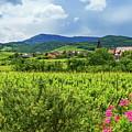 Alsace Landscape, France by Elenarts - Elena Duvernay photo