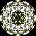 Alstroemeria Wild 1 by Marsha Tudor