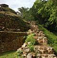 Altun Ha Maya Ruins by Olga Hamilton