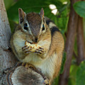 Alvin Eating 2 by Brian Hale
