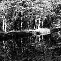 Am Alten Kanal by Juergen Weiss