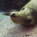 Am I Cute? Asks The Sea Lion by Matt Swinden