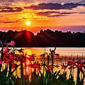 Amaryllis At Sunrise Over Lake by Don McDaniel
