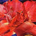 Amaryllis 2 by Carolyn Coffey Wallace