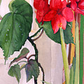 Amaryllis And Begonia by Nancy Watson