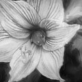 Amaryllis And Tree Frog Painted Bw by Rich Franco