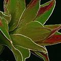 Amaryllis Art by Deborah Benoit