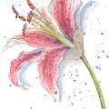 Amaryllis by Debbie Lewis