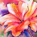 Amaryllis Flower by Carrie McKenzie