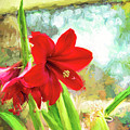 Amaryllis On  The Porch by Kay Brewer