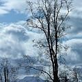 Amazing Birch by Lori Mahaffey