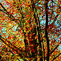 Amazing Fall Foliage by Loretta S