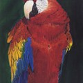 Amazonian Rainbow by Elizabeth Rieke Hefley