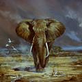 Amboseli Bull Elephant by Silvia  Duran