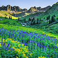 American Basin In Bloom by Wick Smith