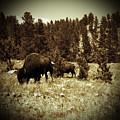 American Bison Vintage 2 by Pamela Peters